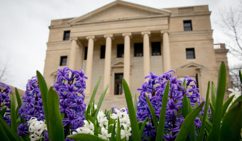 Hyacinths bloom outside Abbott Hall